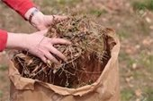 Yard Waste Picture