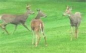 2020 Deer Herd Management Archery Hunt