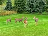 Harmful Impacts of Feeding Deer