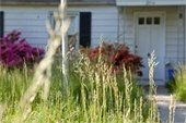 Tall Weeds and Grass