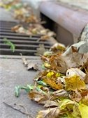 Fall Yard Waste Reminder
