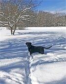 Snowy Dog Playing in Yard